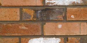 FORTERRA Chatsworth Multi Brick - Butterley Range