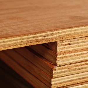 2440x1220x25mm EN314-2 Hardwood Plywood  XX84BB25